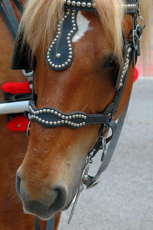vežimas & nbsp, arklys, arklys, žinduolis, sutramdyti, gyvūnas, darbas & nbsp, arklys, grožis, vežimėlis arklys
