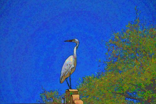 Egret, Egrets, balta, paukštis, paukščiai, laukinė gamta, sėdi, spalvinga, meno, menas, dažytos, tapybos, animacinis filmas, animacinis filmas, Laisvas, viešasis & nbsp, domenas, mėlynas, animacinis filmas balta egret