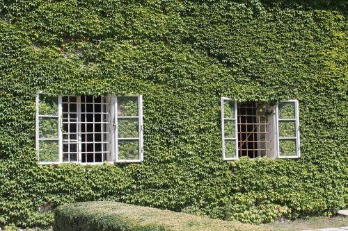 pilies teismas,marchfeld,žemutinė Austrija,austria,gamta,weinviertel,gyvūnai,gėlė,augalas,siena,Hauswand,langas,žalia augalai
