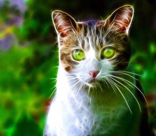 katė,kačių,naminis gyvūnėlis,gyvūnas,gata,kačių veido,atrodo,ūsai,kačių nosis,kačių akys,kačių išvaizda,gyvūnai,fauna,žalios akys,plaukuotas,nagai,kačiukas,fraktalas,dizainas,mielas,žalias,neonas
