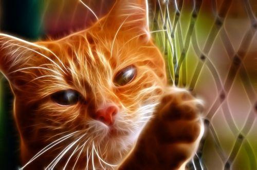 katė,kačių,naminis gyvūnėlis,gyvūnas,gata,kačių veido,atrodo,ūsai,kačių nosis,kačių akys,kačių išvaizda,gyvūnai,fauna,geltonos akys,plaukuotas,nagai,kačiukas,fraktalas,dizainas,mielas,oranžinė,neonas,oranžinės akys,grotelės