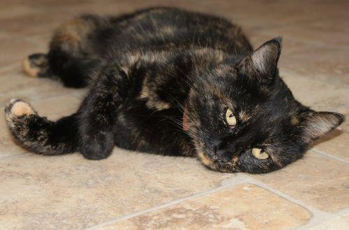 katė,akys,naminis gyvūnėlis,katės akys,didelės akys