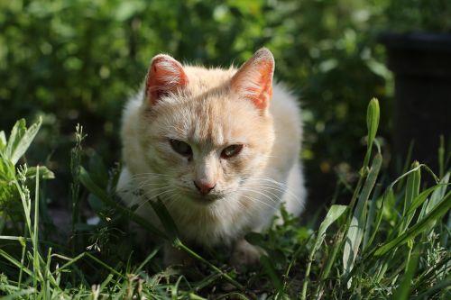 katė,dacha,katės,kaimas
