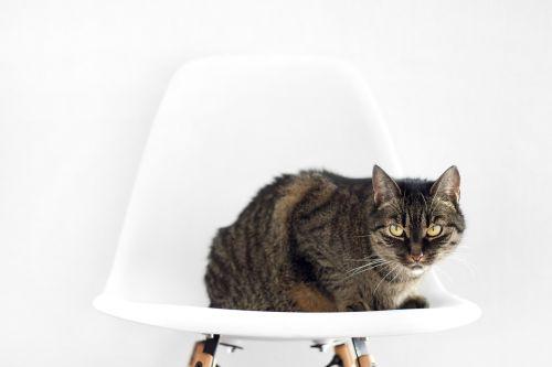 katė,kėdė,sėdėti,sąranka,baltas fonas