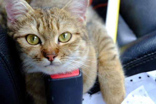 katė,gyvūnas,mielas,kačiukas,namai,kačiukas,kačiukas,naminis gyvūnėlis,gamta,vienas,ruda