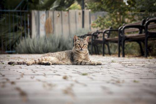 katė,gatvė,gyvūnas,benamiai,kailis,akys,miestas,žinduolis,benamystė,mielas,vidaus,naminis gyvūnėlis,minkštas,miesto,purus,minkštumas,kačių,mielas,mielas,linksma,žavinga