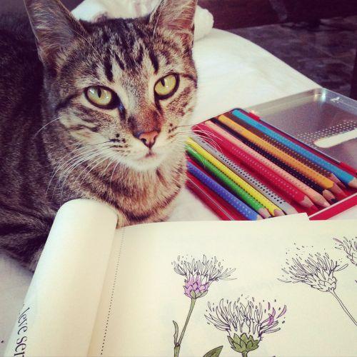 katė,dažymas,piešimas,hobis,Pasidaryk pats,naminis gyvūnėlis,namai