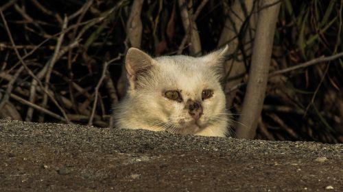 katė,bjaurus,sužeisti,išgąsdinti,paslėpta,nesaugus,stebėti