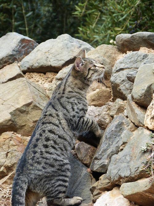 katė,sulaikymas,lipti,kačių