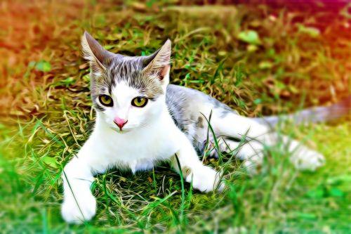 katė,akis,žalia akis,kūdikiai,plaukai,nuotaika,žalios akys,augintiniai,poilsis,mielas,katės akis,Mano mėgstamiausias,taikus,atsipalaiduoti,žiūri,kačiukas,gyvūnai,ausis,nosis,žiūrėti,skaitmeninis,grafika