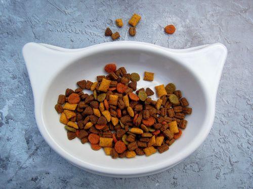 katė,maistas,naminių gyvūnėlių maistas,Katės maistas,sausas maistas,dubuo,balta,spalva