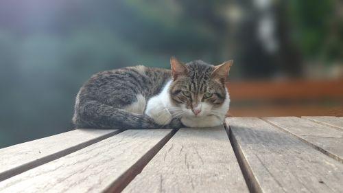 katė,vaizdas,Saunus