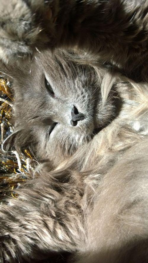 katė,poilsis,atsigavimas