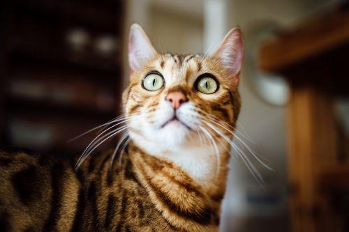 katė,horizontalus,geltona