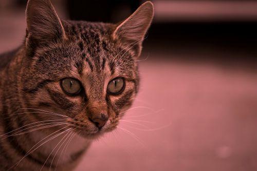 Katė, Tomcat, Out, Ruduo, Apie, Katės, Naminis Gyvūnėlis, Grožis, Akis, Portretas, Purus, Ruda, Nas, Laukiniai, Žalias, Parkas