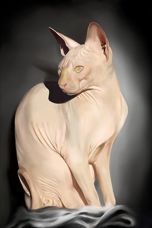 katė, plikasis katė, Sfinksas, plika katė, miela katė, pilka katė, katinas Moteris katė, portretas, naminė katė, Kačių veido, nemokama dažymas, gyvūnas, augintinė, geltonos akys, Nemokama iliustracijos