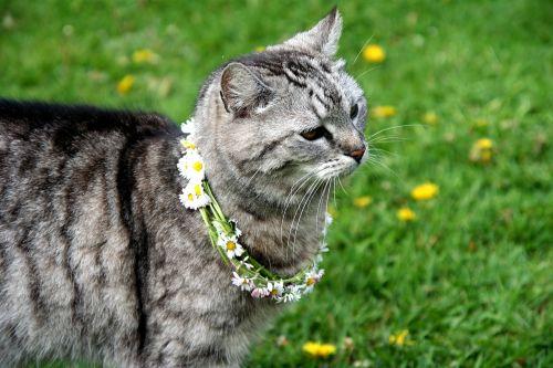 katė,gyvūnas,žolė,mieze