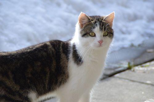 katė,sniegas,žiema,mieze