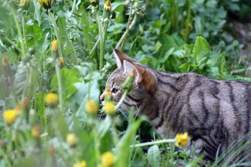 katė,skonis,pavasaris