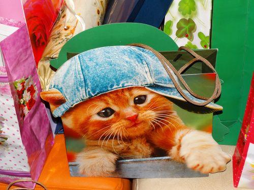 katė,dovanų krepšys,dangtelis,kačiukas