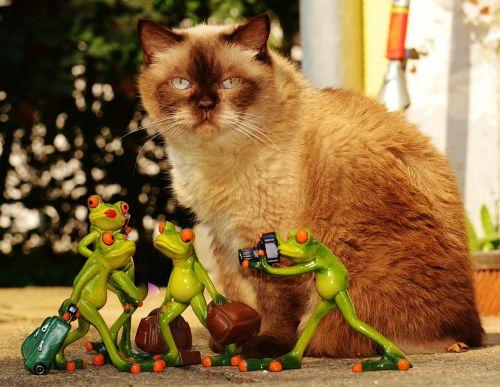 katė,varlės,Britų trumpaplaukis,mėlyna akis,juokinga,kelionė,bagažas,Holdall,eik šalin,šventė,varlė,kelyje,gyvūnas,linksma,figūra,mielas,saldus