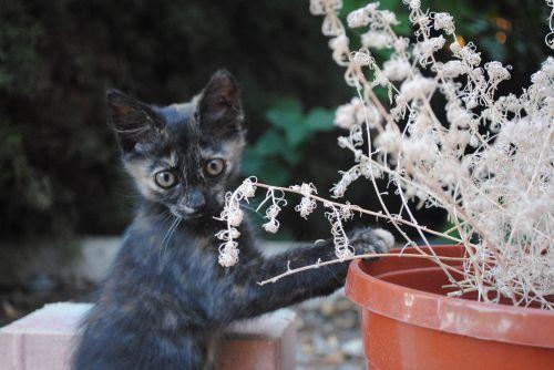 katė daro sodininkystę, kačiukas sodininkystė, linksmas kačiukas, katė, mielas, kačiukas, mielas kačiukas, kačiukas stovi, gyvūnas, kačių, kačiukas, kailis, naminis gyvūnėlis
