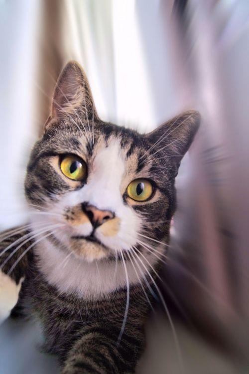 katė, sintezė, nuotrauka, nuotrauka, kačių sintezė