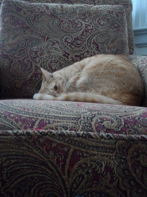 katė, katė & nbsp, kėdė, katė & nbsp, viena & nbsp, akis & nbsp, atidaryta, katė & nbsp, poilsio, katė & nbsp, miegas, atsipalaidavęs & nbsp, katė, mielas & nbsp, katinas, tabby, oranžinė & nbsp, katė, katė kėdėje