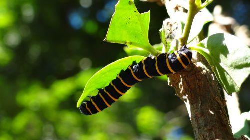 vikšras,transformacija,metamorfozė,iššūkis,gamta