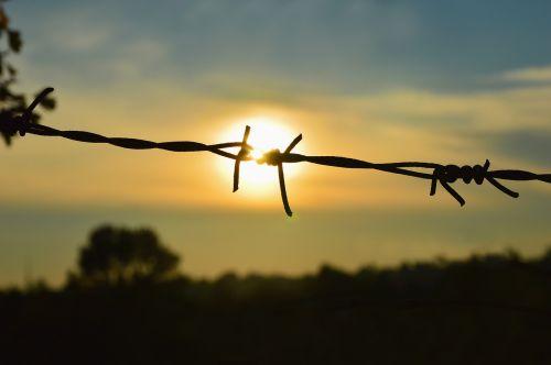 sugauti,nelaisvė,išlaisvinimas,Laisvas,rip,saulė,viela,tvora