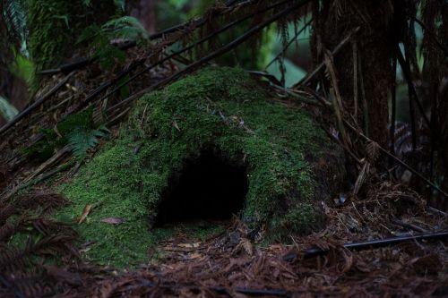 urvas,miškas,samanos,gamta,miškai,įėjimas,urvas,natūralus,fantazija,tamsi