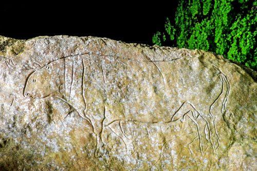 omero urvas,grafiti,paleolitas,bos primigenius,uro,Oks primordial,priešistorė,roko graviravimas,petroglyfai,graviūrų,bovid,papasidero,kalabrija,italy,pollino nacionalinis parkas