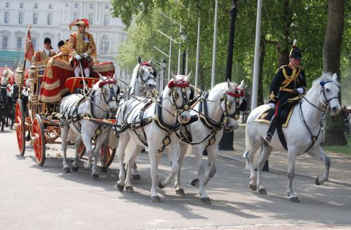 iškilmingas treneris,tradicija,ceremonija,uniforma,vežimas,arkliai,traukimas,treneris,gabenimas,transportas,tradicinis,kultūra