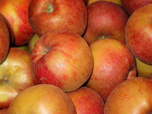 lentos obuolys,obuolys,boskopas,laikomas obuolys,kepti obuoliai,pardavimas,sveikas,vitaminai,mityba,valgyti,į sveikatą,virėjas,rūgštus,minkštimas,virtuvė,Obuolių medis,bio obuolys,bio