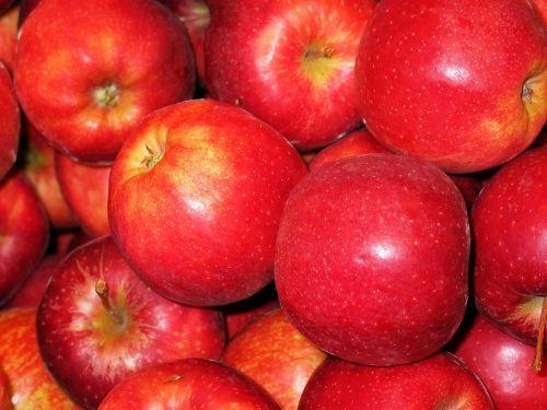 lentos obuolys,obuolys,karališkoji gala,laikomas obuolys,kepti obuoliai,pardavimas,sveikas,vitaminai,mityba,valgyti,į sveikatą,virėjas,rūgštus,minkštimas,virtuvė,Obuolių medis,bio obuolys,bio