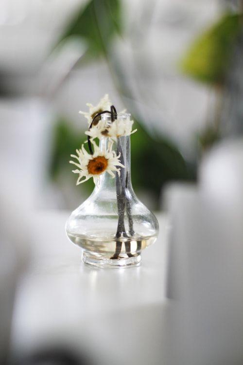 keisti,gėlė,nudrus,nudrus