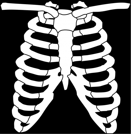 krūtinė,briaunelė,kaulas,krūtinės angina,cefalotoraksas,Halloween,medicina,skeletas,nemokama vektorinė grafika