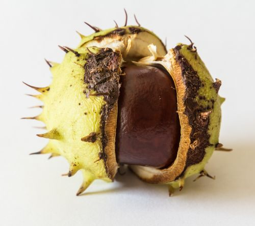 kaštonas,vaisiai,lukštas,vaisiai,ruda,dygliuotas,ruduo,pieksig,medžio vaisiai,kaštainių vaisiai,rudens vaisiai
