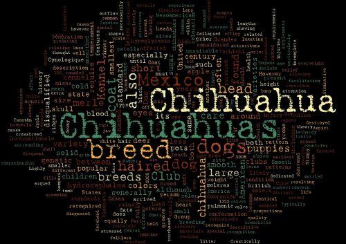 chihuahuas,naminis gyvūnėlis,žodis debesis,šunų veislė
