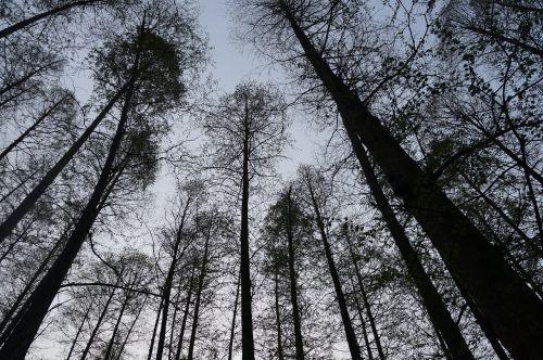 Kinija,medžiai,dangus