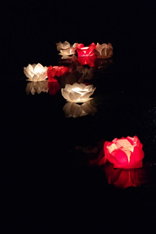 Kinija,plūdė,žvakė,lotosas