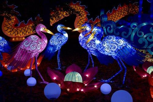 kinų žibintai, naktis, Žibintai, šviesos, Azijos, per metus, lempa, šventė, žibintai, Kinija, apšvietimas, papuošalai, šilko, ekranas, Rodyti, paukščiai, kiaušiniai, mėlyna, rožinis, gandrai, vakaras