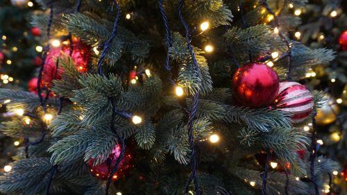 Kalėdos,medis,Kalėdų eglutė,šventė,Kalėdų eglės,žiema,apdaila,xmas,Kalėdų eglutė,raudona,sezonas,gruodžio mėn .,šventė,ornamentas,žalias,sezoninis,metai,naujas,balta,Kalėdų eglutė,žvaigždė,sniegas,kortelė,dizainas,pušis,rutulys,snaigė,šventinis,šaltas,dovanos,švesti,žibintai