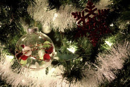 Kalėdos,medis,ornamentas,Kalėdų eglutė,šventė,apdaila,žiema,šventė,pušis