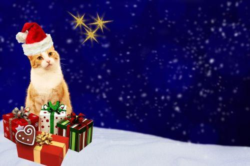 Kalėdinis atvirukas,katė,dovanos,atvirukas,mėlynas,raudona,auksas,šventinis,Kalėdų motyvas,Kalėdos,atvirukas,pagamintas,žiema,sniegas