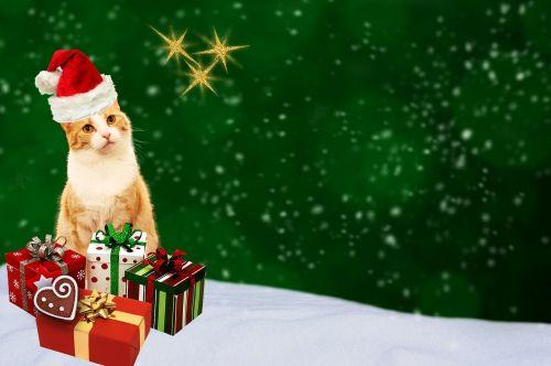 Kalėdinis atvirukas,katė,dovanos,atvirukas,žalias,raudona,auksas,šventinis,Kalėdų motyvas,Kalėdos,atvirukas,pagamintas,žiema,sniegas