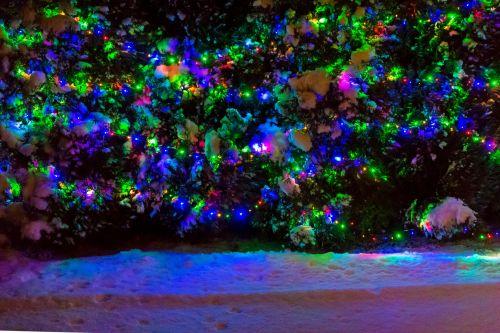 šviesus, Kalėdos, Kalėdų & nbsp, žiburiai, spalvinga, padengtas, tamsi, apdaila, šventė, šviesa, naktis, lauke, lauke, lauke, sezonas, sezoninis, sniegas, medis, žiema, xmas, Kalėdų šviesos lauke