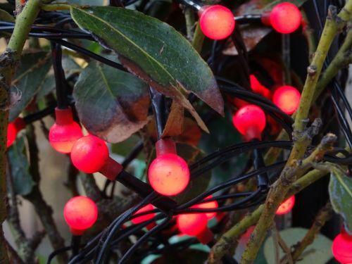 Kalėdos, santa, Claus, medis, medžiai, šviesa, žibintai, lempa, lempos, neonas, neonas, apdaila, dekoracijos, dekoruoti, xmas, šventė, atostogos, linksmas, laimingas, pateikti, dovanos, Kalėdų eglutė