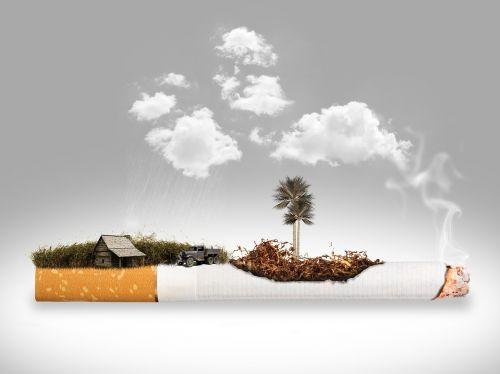 cigarečių,pašalinimas,plantacija,tabakas,dūmai,rūkymas,draudimas rūkyti,priklausomybe,labai priklausomybę,nikotinas,angelai,fantazija,nesveika,debesys,ūkis,gamta