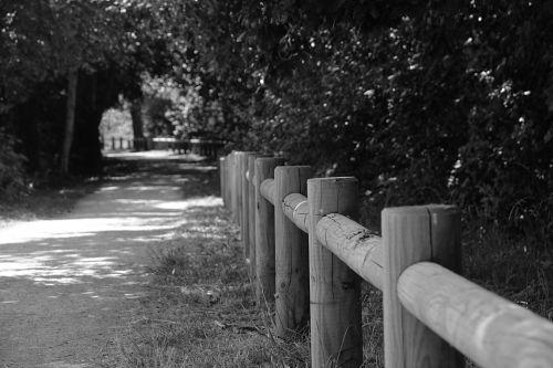 vaikščioti, Promenada, gamta, kelias, juoda & nbsp, balta, promenada